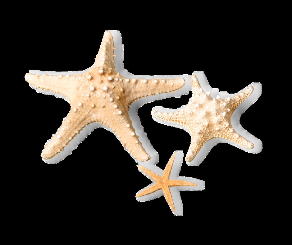 Salty Starfish Vacay